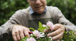 Elderly man flower gardening